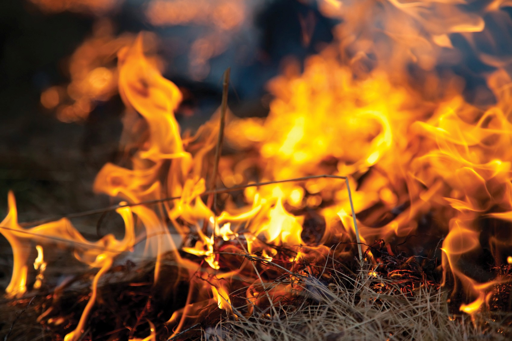 Prescribed Burn Program